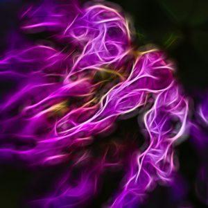 nature. electrified. - Flora