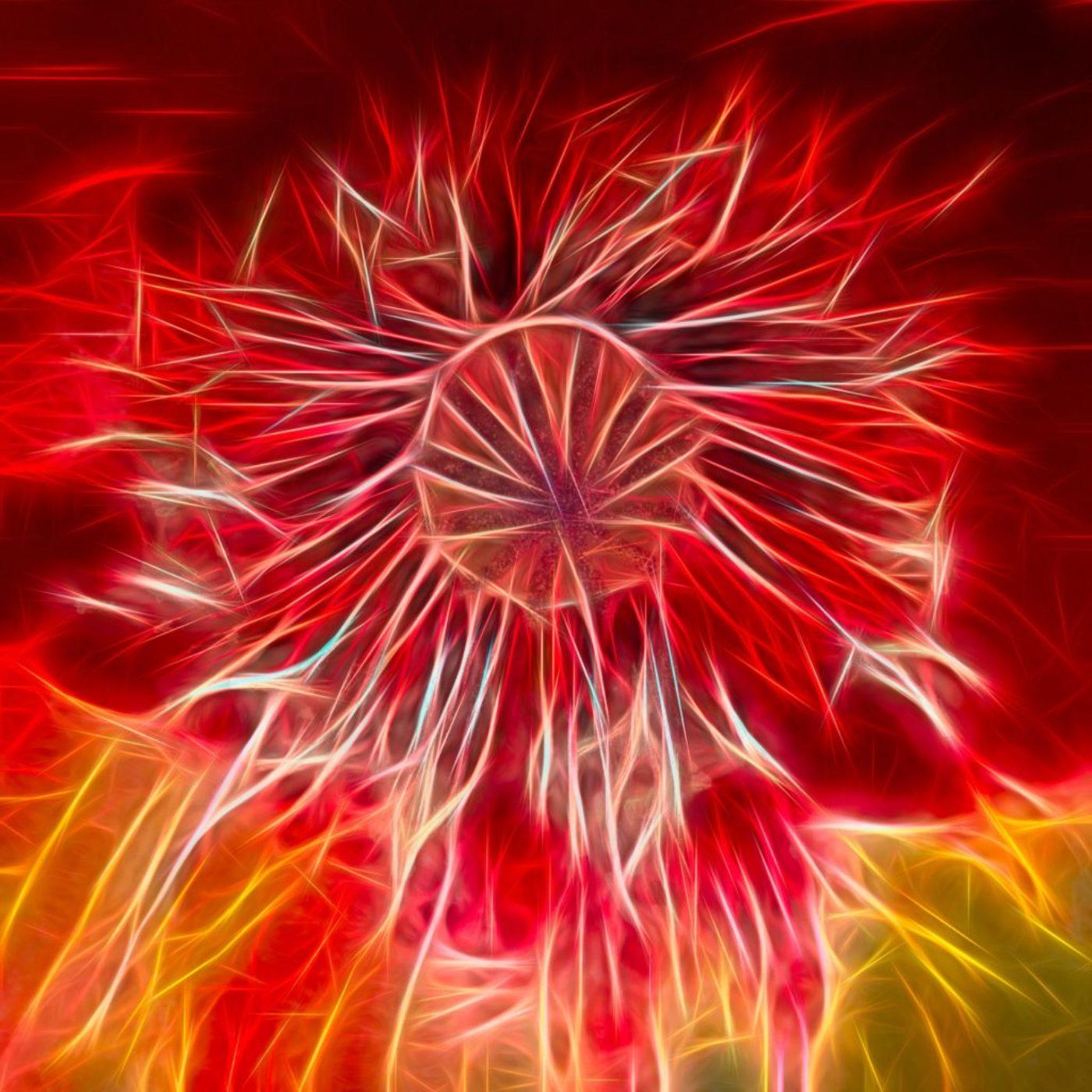 nature. electrified. - flora - Mohn - Papaver - Poppy - ポピー