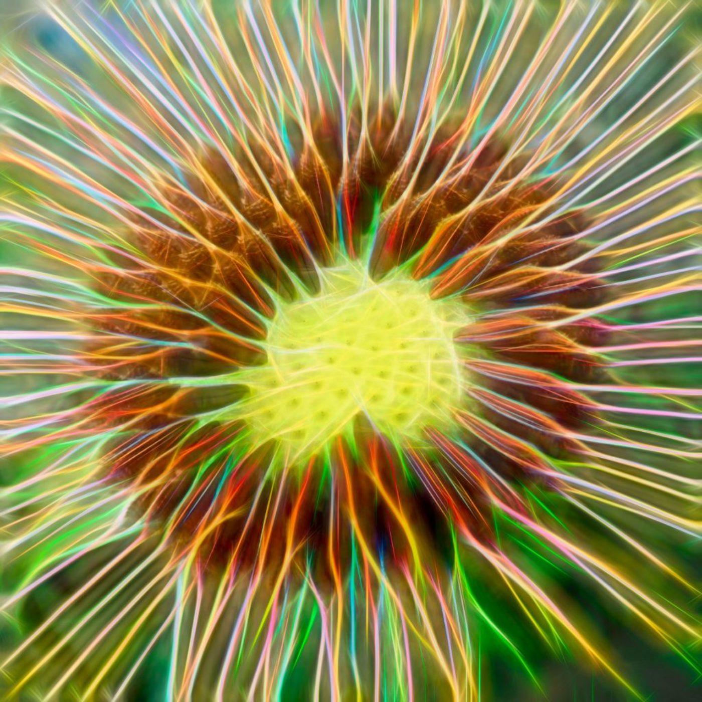 nature. electrified. - flora - Löwenzahn - Taraxacum sect. Ruderalia - Dandelion - 蒲公英