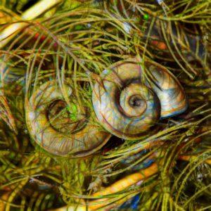 nature. electrified. - fauna - glanzschnecke - aegopinella nitidula - retinella nitidula - glass snail - かたつむり