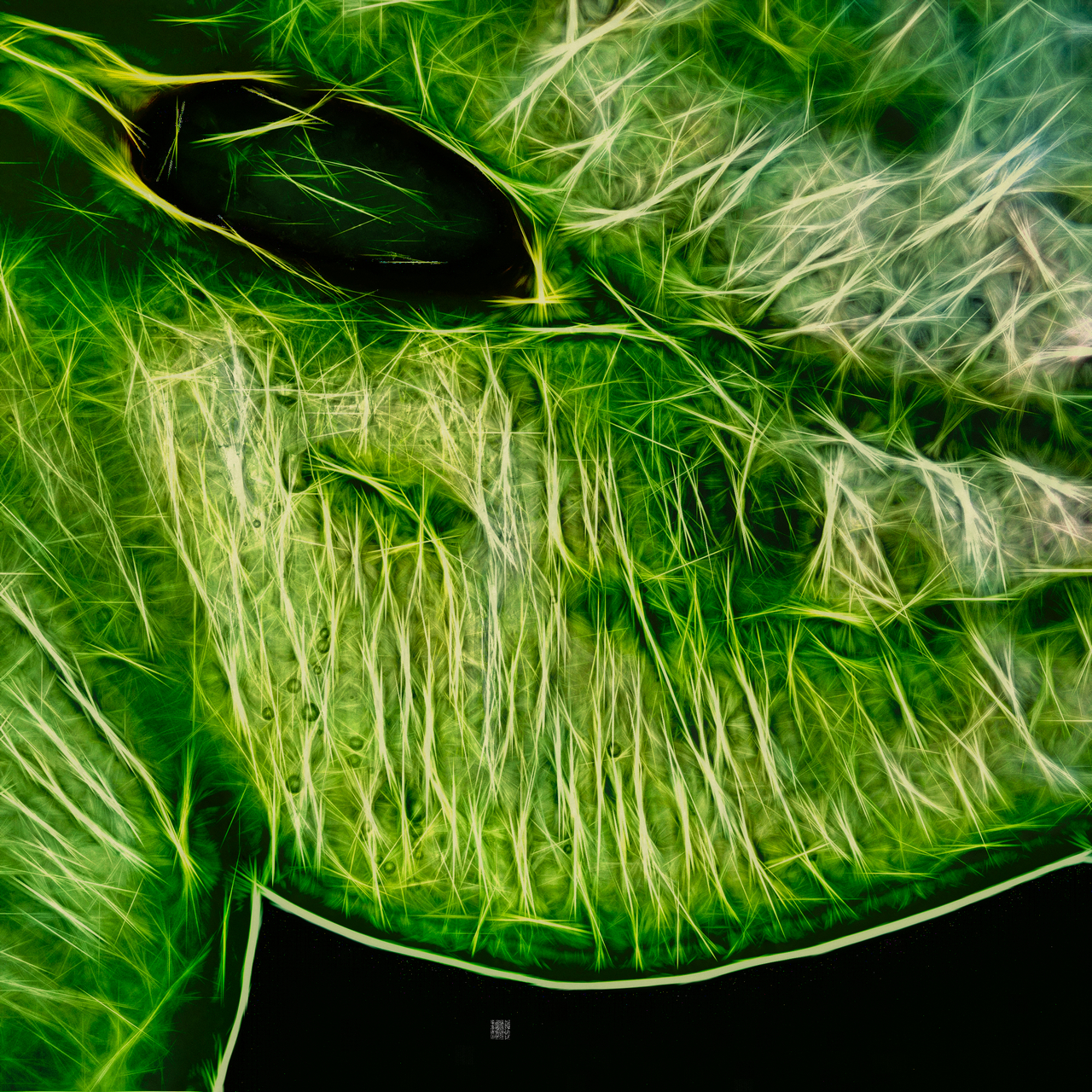 nature. electrified. - food